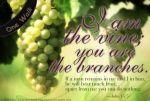 john15_5_I am the vine w banner